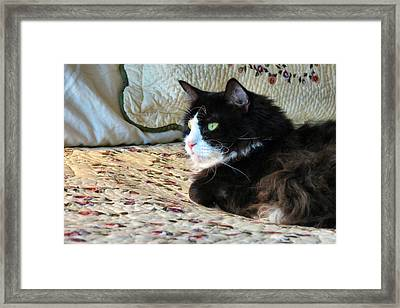 Country Kitty Framed Print