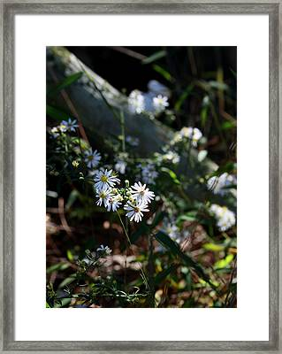 Country Memory Framed Print