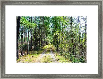 Framed Print featuring the photograph Country Path by Shannon Harrington