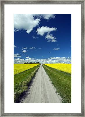 Country Road With Blooming Canola Framed Print by Dave Reede