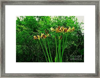 Country Yellow Lilies Framed Print by Marsha Heiken