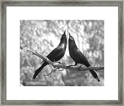 Framed Print featuring the photograph Courtship by Jan Piller
