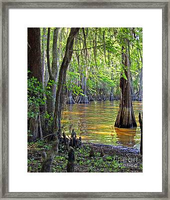 Cove At Caddo Lake Framed Print by Gayle Johnson