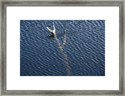 Cove Branch Framed Print by Steven A Bash