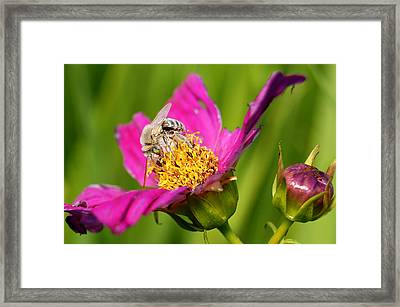 Covering The Cosmos II Framed Print by Bill Pevlor