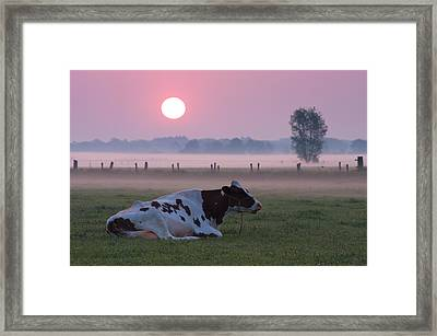 Cow In Meadow Framed Print
