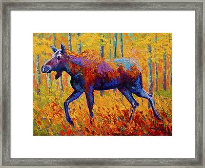Cow Moose Framed Print by Marion Rose