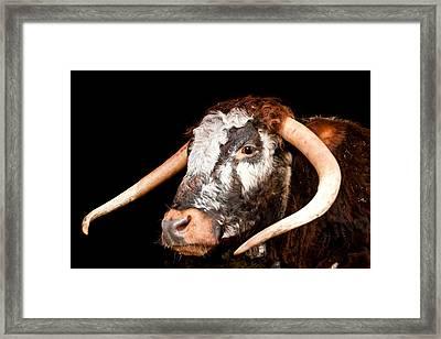 cow Framed Print