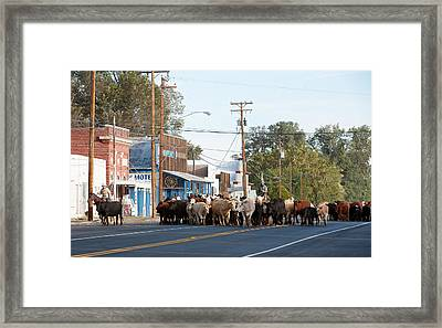 Cow Town Framed Print by Gary Rose
