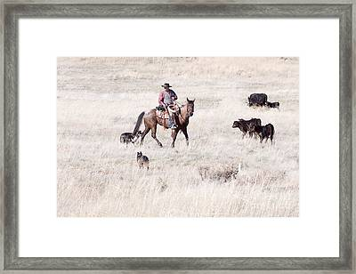 Cowboy Framed Print by Cindy Singleton