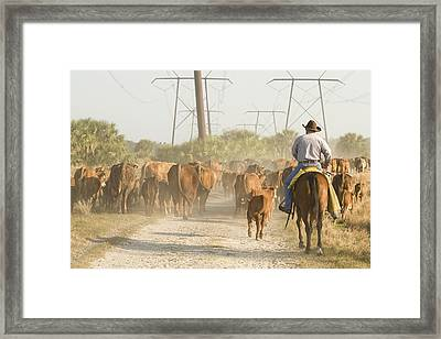 Cowboy Moving A Herd Of Cattle Framed Print by April Bauknight