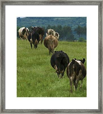 Cows Going Home Framed Print by Pan Orsatti