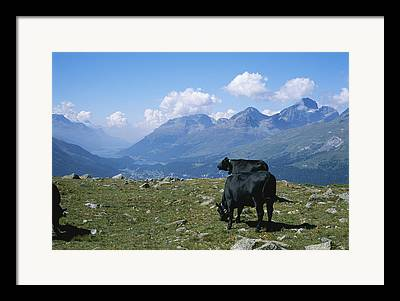Dairy Industry And Production Framed Prints