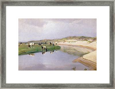 Cows Grazing At Liver As North Jutland Framed Print