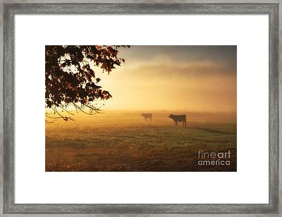Cows In A Foggy Field Framed Print