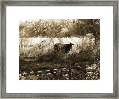 Cows In Pasture Framed Print by Pamela Stanford
