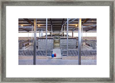 Cowshed Interior Framed Print