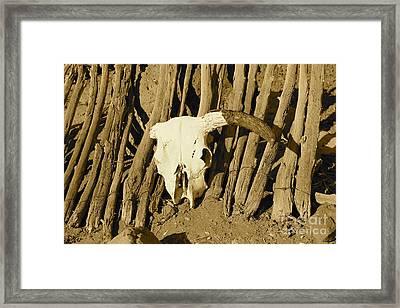 Cowskull - Sepia Framed Print by Pamela Walrath