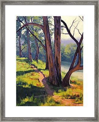 Coxs River Sheoaks  Framed Print by Graham Gercken