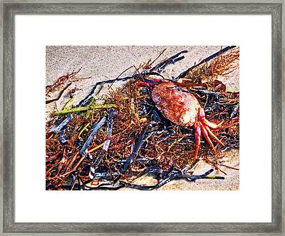 Framed Print featuring the photograph Crab Boil by William Fields