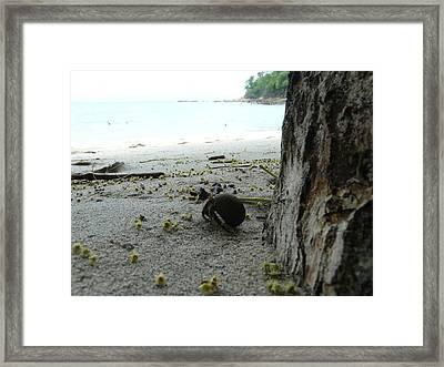 Crab Framed Print by Juan Francisco Zeledon