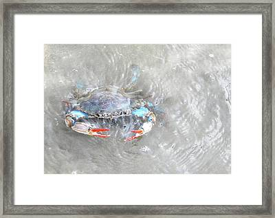 Crab Shack Framed Print