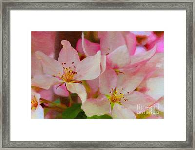 Crabapple Floral Paint Framed Print by Donna Munro