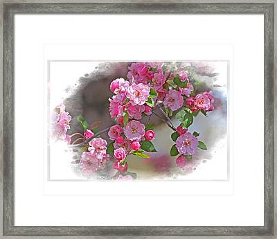 Crabapple Plethora Framed Print