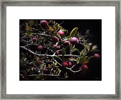 Crab Apples At Night Framed Print