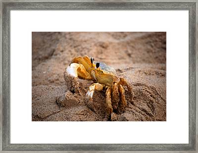 Framed Print featuring the photograph Crabby by Linda Mesibov