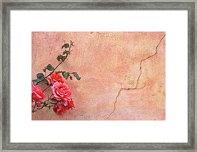 Cracked Wall And Rose Framed Print by Tom and Pat Cory