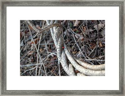 Framed Print featuring the photograph Cradle by Mary McAvoy