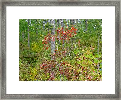 Framed Print featuring the photograph Cranberries With Early Autumn Colors by Jim Sauchyn