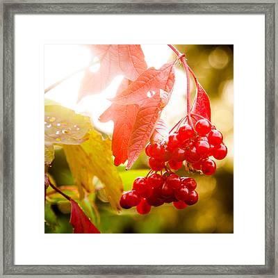 Cranberry Bliss Framed Print by Matt Dobson
