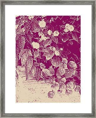 Cranberry Cascade Framed Print