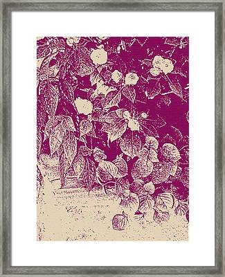 Cranberry Cascade Framed Print by Katharine Birkett