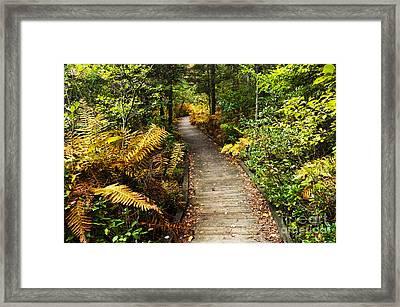 Cranberry Glades Botanical Area Framed Print