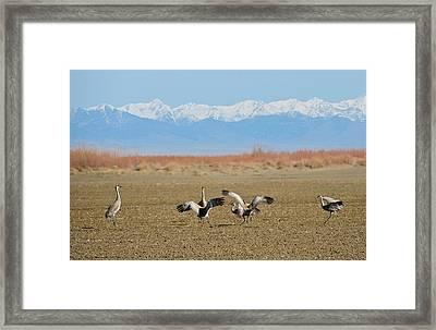 Crane Games Framed Print