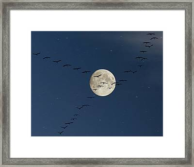 Cranes Flying To Moon Framed Print