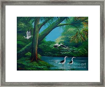 Cranes On The Swamp Framed Print