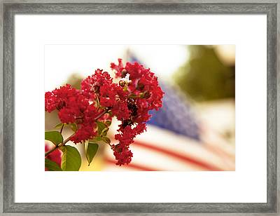 Crapemyrtle And Patriotic Proud Framed Print by Toni Hopper