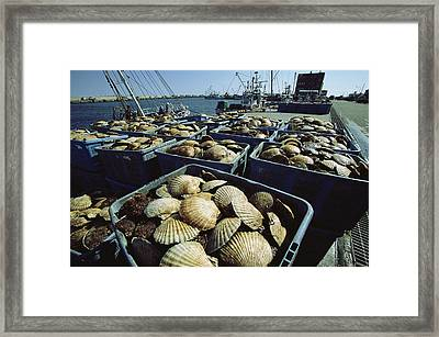 Crates Filled With Scallops Sit Framed Print