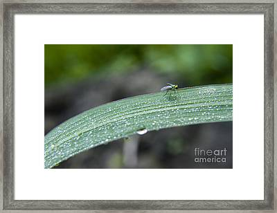 Crawling Along Framed Print by Darleen Stry