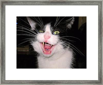 Crazy Cat Framed Print