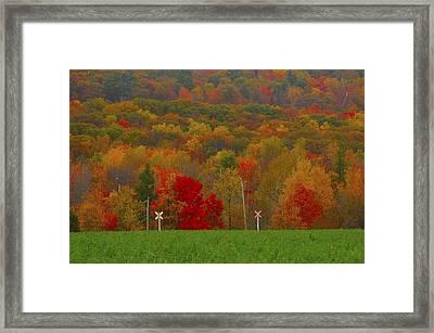 Crazy Fall Colors Framed Print
