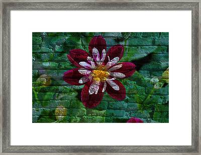Crazy Flower Over Brick Framed Print
