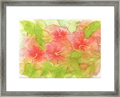Creamsicle Hibiscus Framed Print by Carla Parris