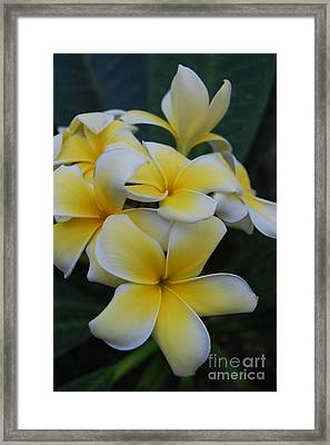 Creamy Yellow Flowers Framed Print