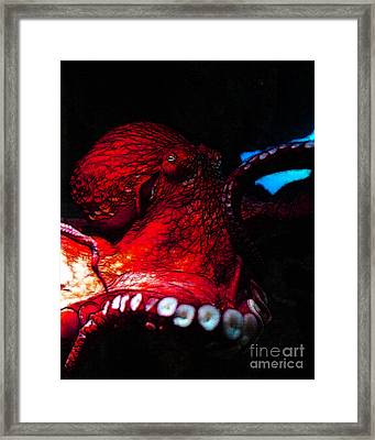 Creatures Of The Deep - The Octopus - V6 - Red Framed Print by Wingsdomain Art and Photography