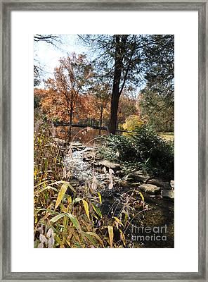Creek Framed Print by Denise Ellis
